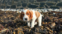 Billy on seaweed