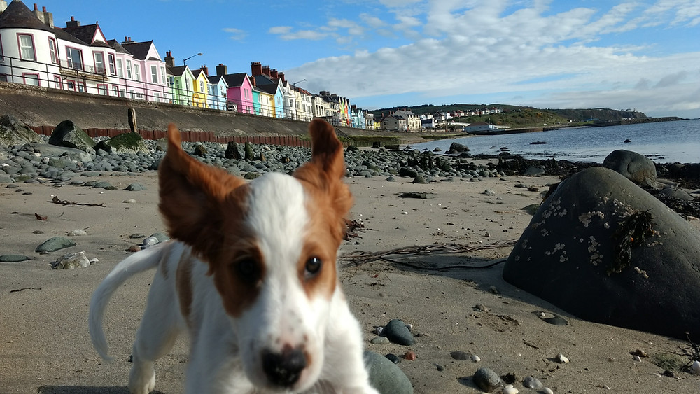 Berry´s first day on the beach without her siblings