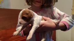 Baylee 2 weeks old