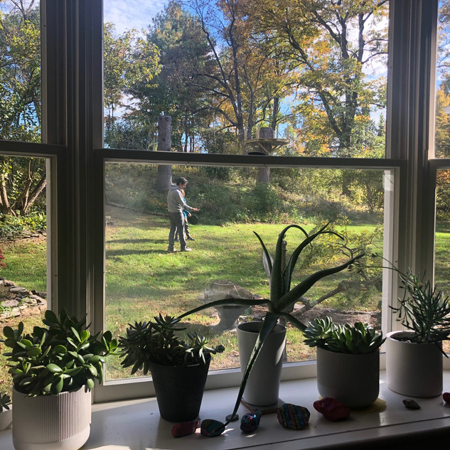 looking out from the kitchen windows