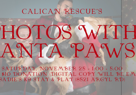 Tis the Season! Santa Paws!