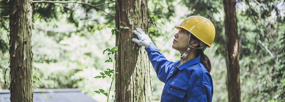 Field Service Management Software in forestry