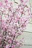 桜の装花特集