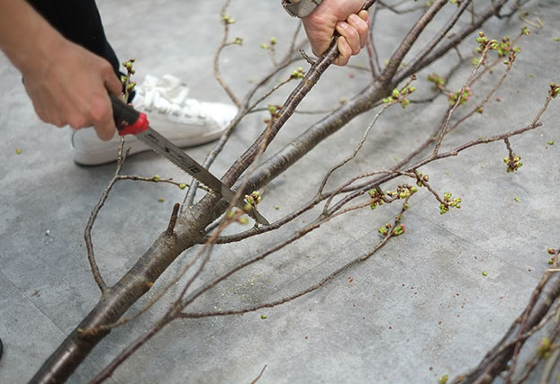 枝を切り分ける