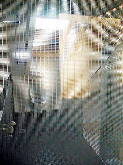 studio db ai house D1 transparent toilet