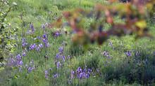 Iz hiše v arhišekturo - ohranjajte neokrnjeno naravo!