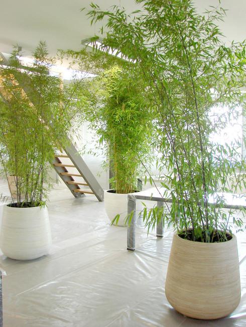 studio db ai office architecture pp 9002 green office design