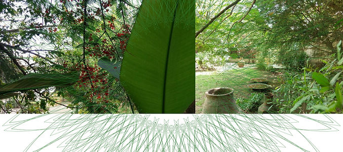 5_Chlorophyll listeners C.jpg
