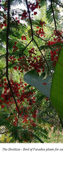 Personal Biodiversity Unit PBU (4)