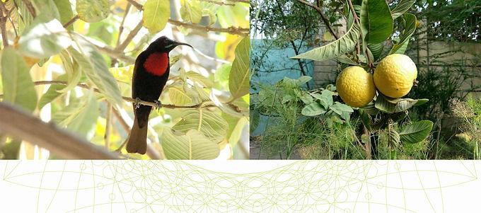 10_Bird watchers & fruit pickers C.JPG