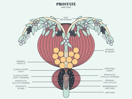 Prostate Surgery and Pelvic Floor Therapy