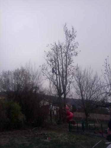 Bäume schneiden
