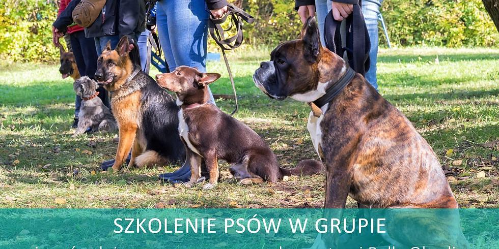 Szkolenie psów w grupie z elementami Rally-O