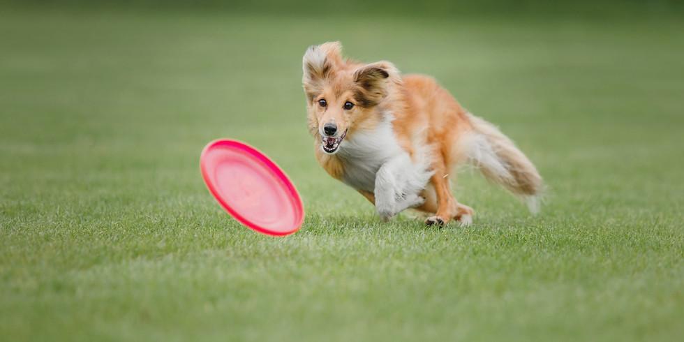 Kurs Dogfrisbee poziom 1