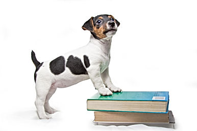puppy with books.jpg