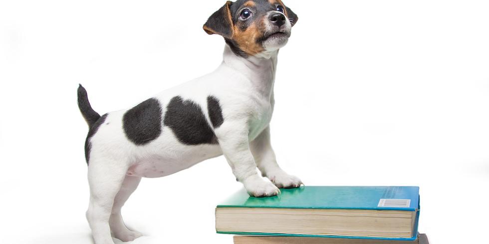 Psie Przedszkole poziom 1