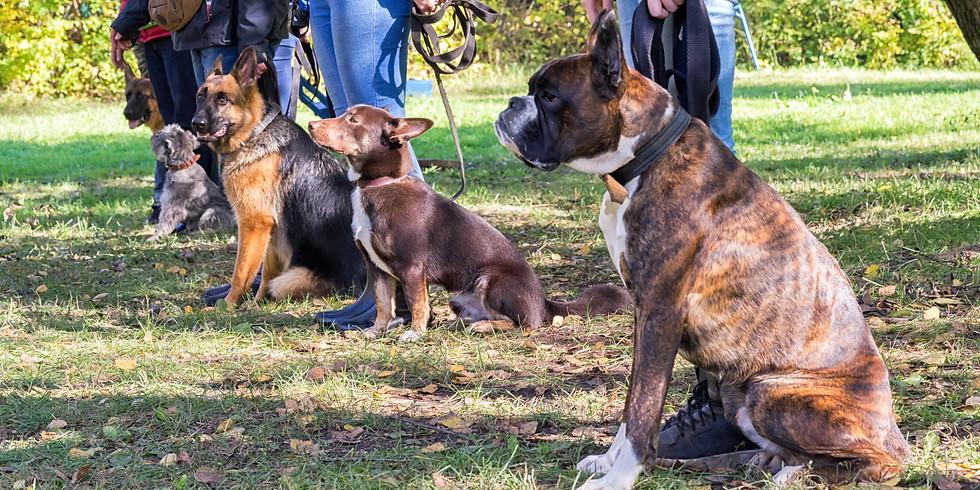 Szkolenie psów w grupie - poziom średnio-zaawansowany
