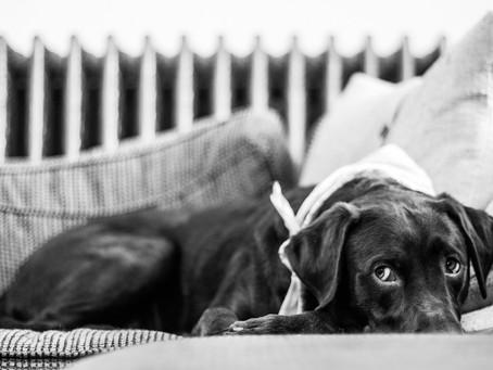 Dlaczego nasze psy wykazują niepożądane zachowania?