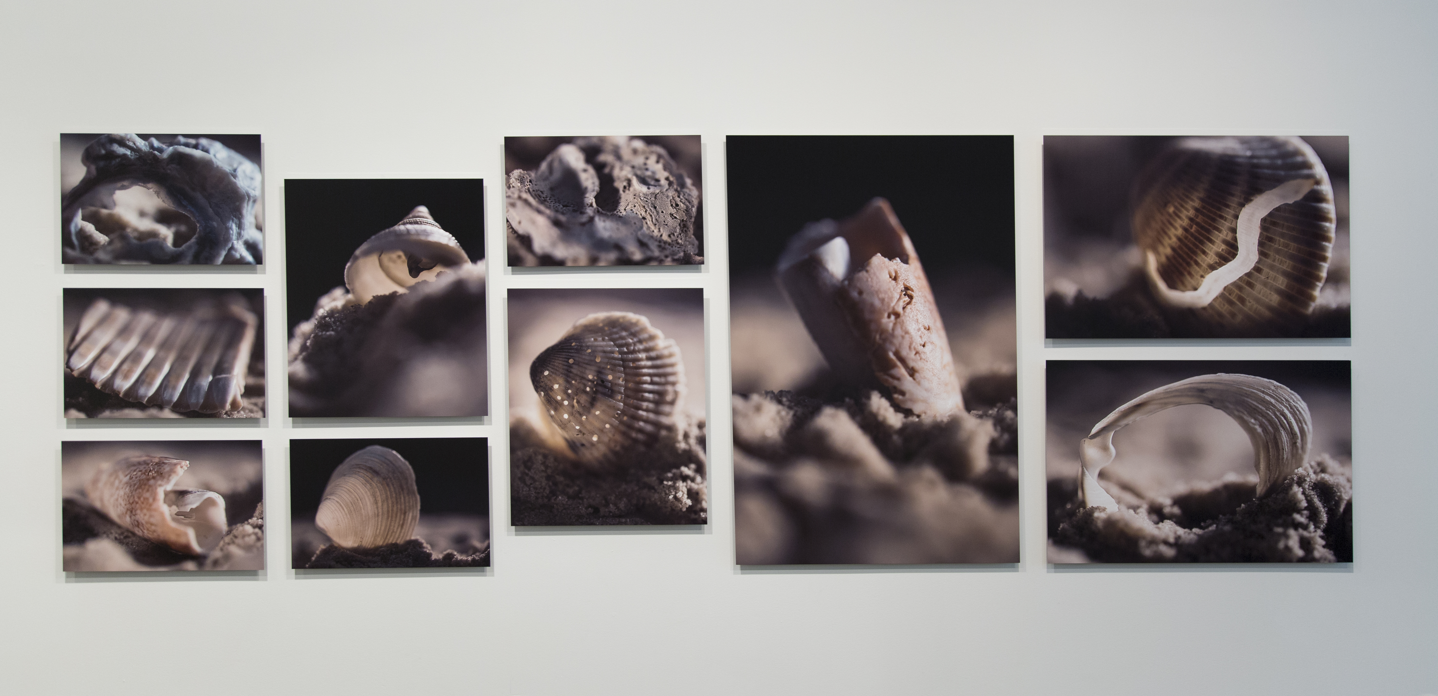 She Shells Photo Installation