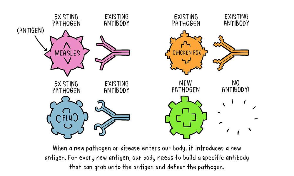 infographic: pathogen vs. antibody