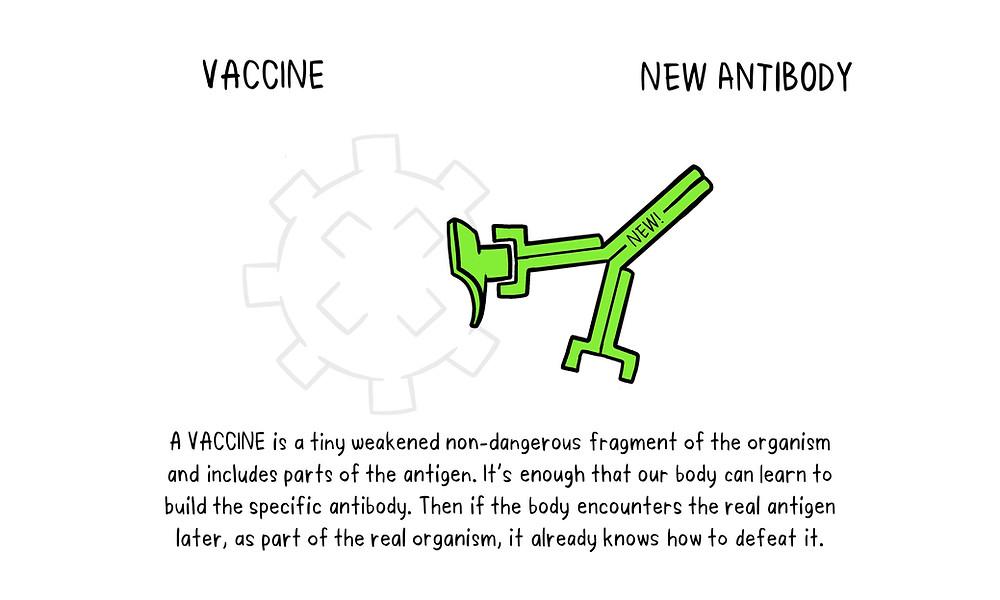 infographic: vaccine & antibody