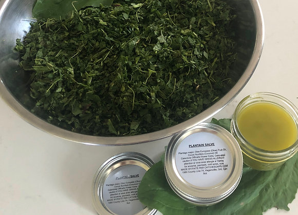 Plantain Salve by catchesoaps