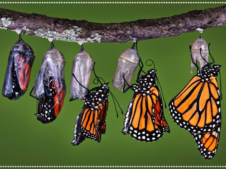 Revelation #19: Metamorphosis
