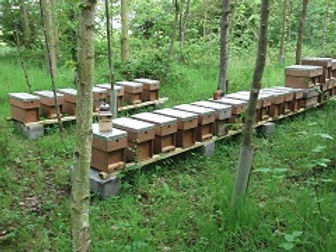 Beekeeping, Bees, Bee Products, Mr Bees