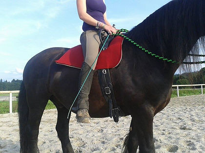 Therapy saddle out of felt in action