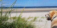 Urlaub mit Hund z.b. am Meer