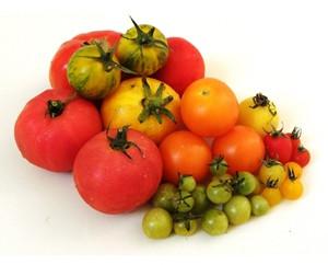 O Tomate - cultivo