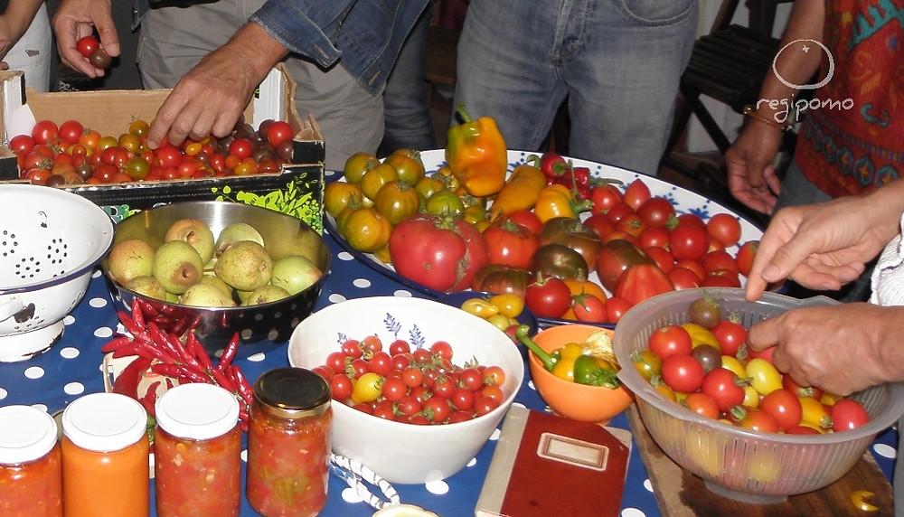 A escolha do tomate.