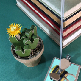 Living Pebble | Conophytum bilobum