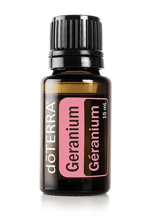 Géranium  Pelargonium graveolens