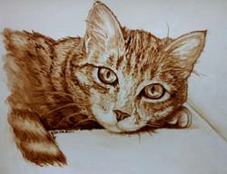 Ritratto di Gatto con caffè