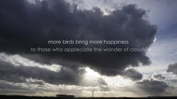 more birds bring more happiness