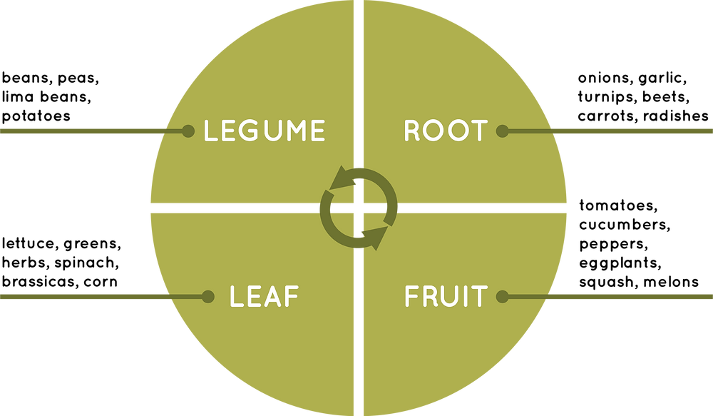 legume, root, leaf, fruit annual crop rotation