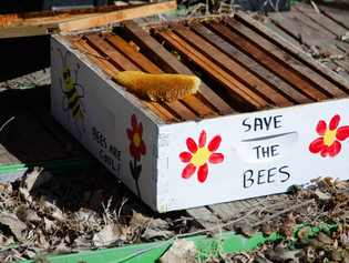 Happy Pollinator Week!