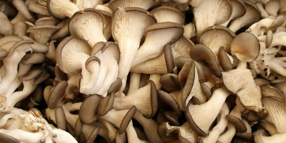 Cultivating Mushrooms Outdoors