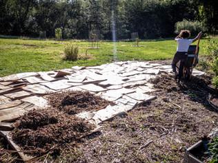 Ask Aaron: Starting a Garden
