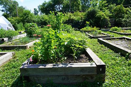 garden-bed_DSC00548.JPG