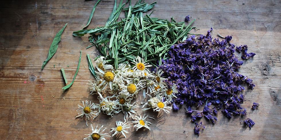 Winter Herbal Medicine Cabinet