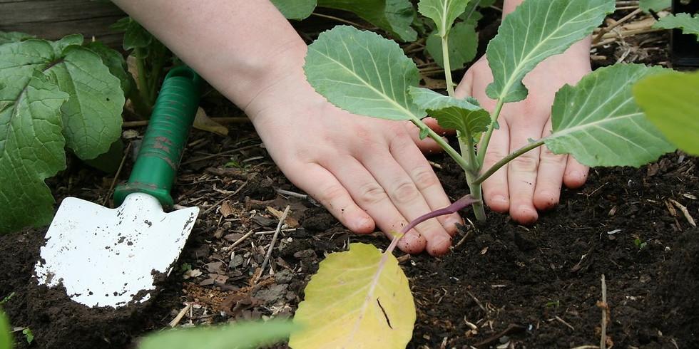 Fall Perennial Garden: Transplanting