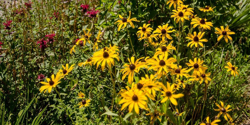 Planting a Pollinator Strip in a Vegetable Garden