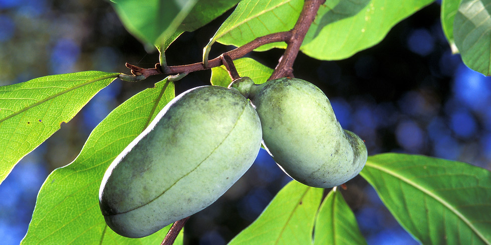 Planting Indigenous Fruits