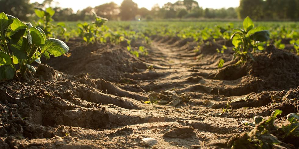 La biología del suelo en tu jardín