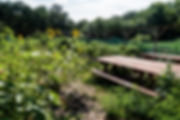 DSC00672.jpg