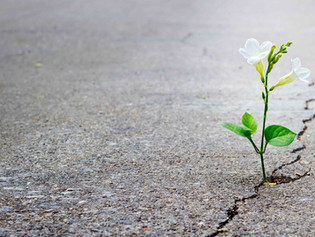 When The Going Gets Tough, the Tough Gets Growing: Changes Since COVID-19