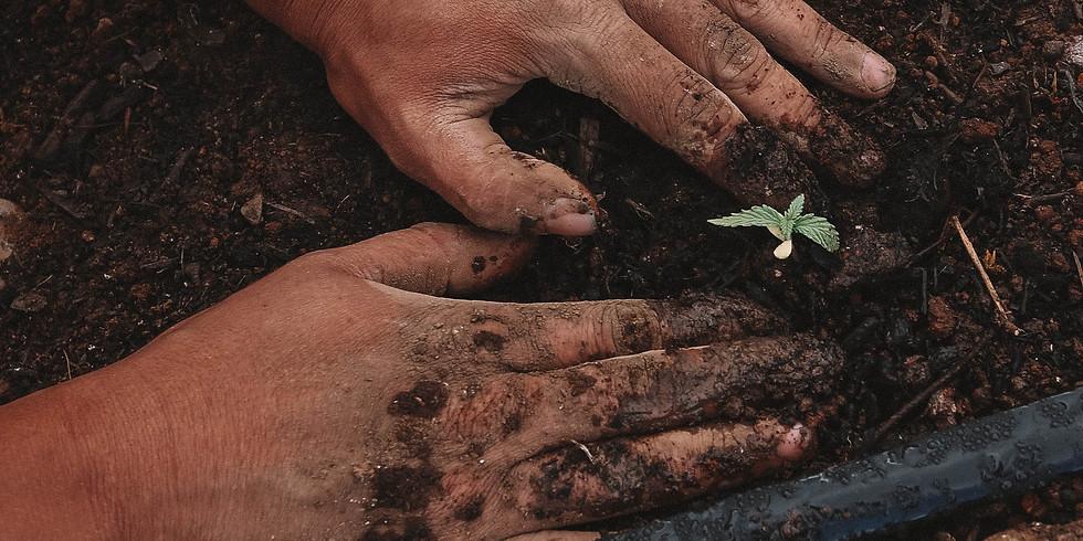 Spring Garden Planning [BIPOC Only]