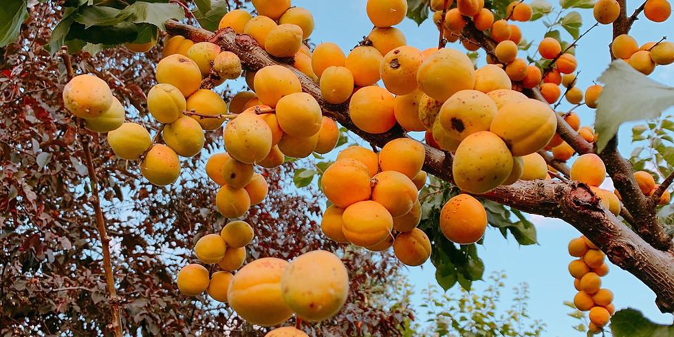 Fruit Trees 101